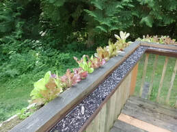 Fun DIY Used Gutter projects